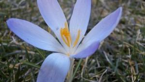 Das Blumen - Hochbeet