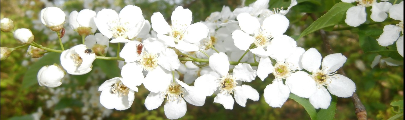 Hochbeet im Garten mit vielen Vorteilen